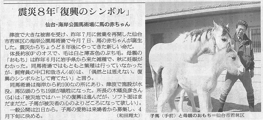 朝日新聞(宮城版)に海岸公園馬術場で誕生した仔馬が掲載されました