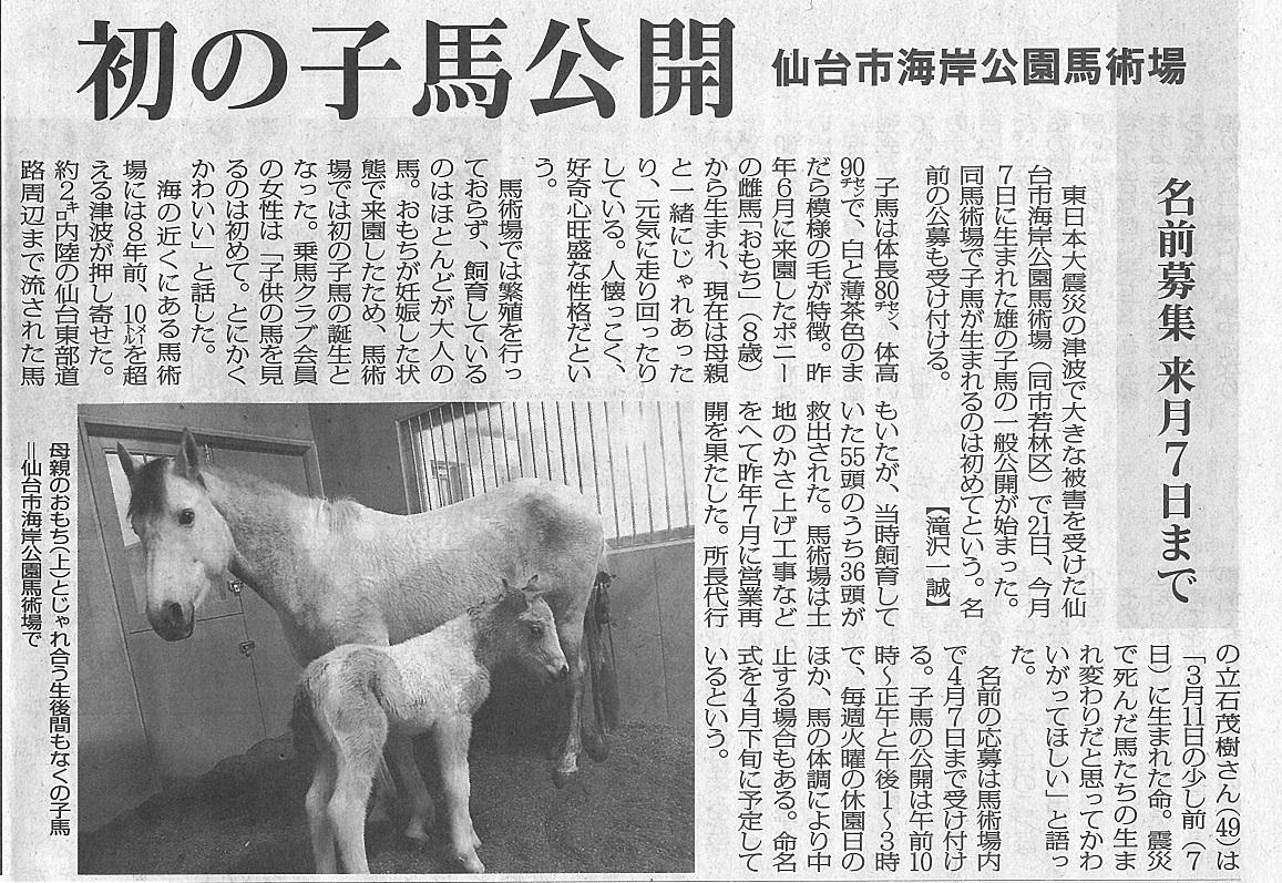 毎日新聞(宮城版)に海岸公園馬術場で誕生した仔馬が掲載されました